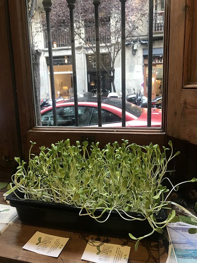 Petit Brot מסעדת Raw Food בברצלונה