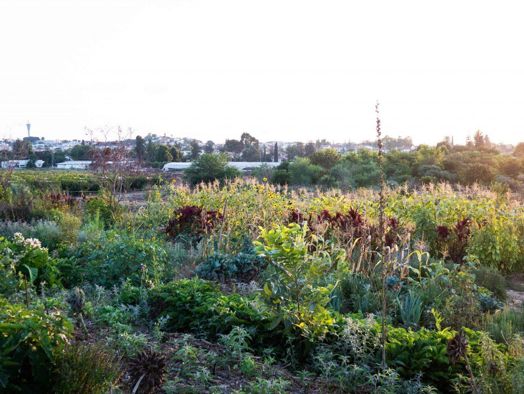 השדה של גינה מזינה בקצה יער קדרון