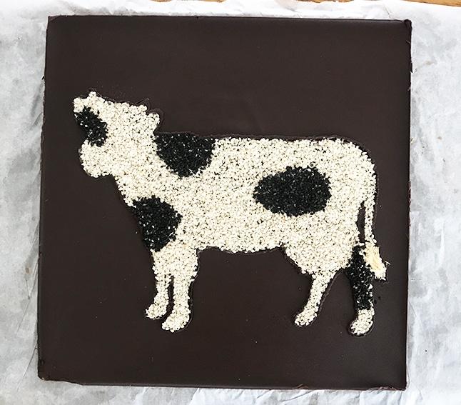 פרה משומשום שחור ולבן על קוביית שוקולד