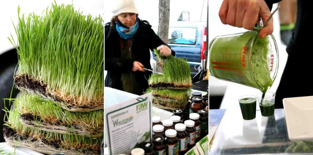 המקומיים עפים על צ'ייסרים של מיץ נבט חיטה. לבריאות