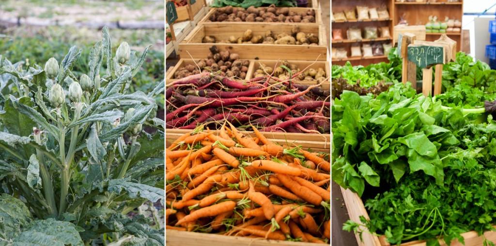 מיני שוק איכרים בחממה בלב השדות. ושום ירוק!
