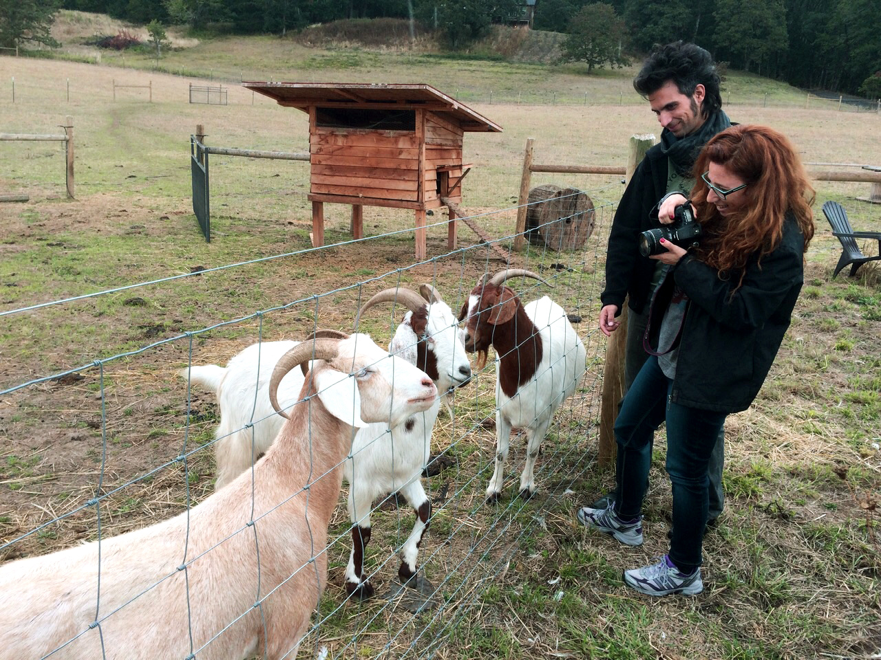 עדר מקסים של דוגמנים. בחוות המקלט